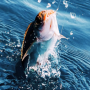 icon Real Fishing Pro 3D